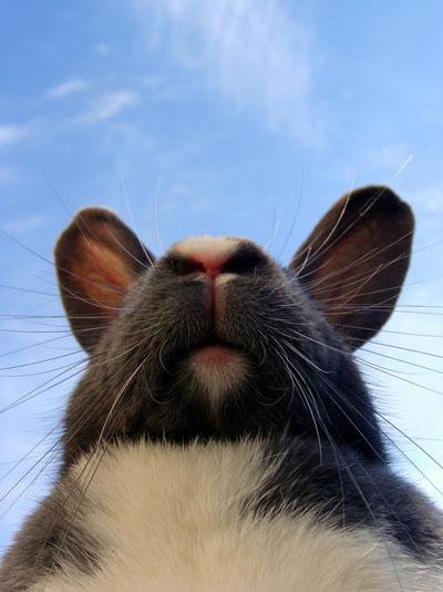 bider kaniner