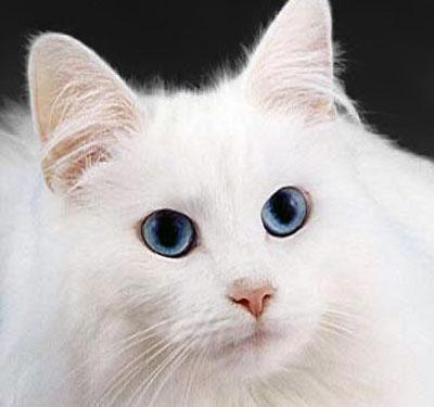 katte allergi