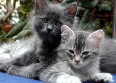 katte levealder