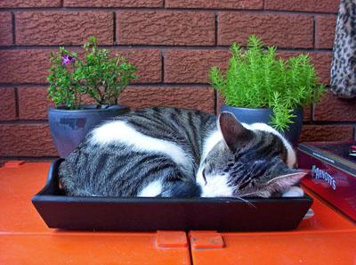 skal katte være inde eller ude
