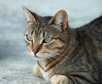 udgifter ved katte